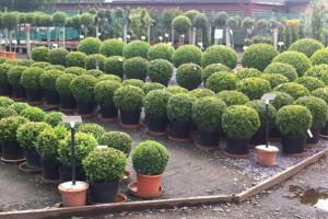 planting-supply